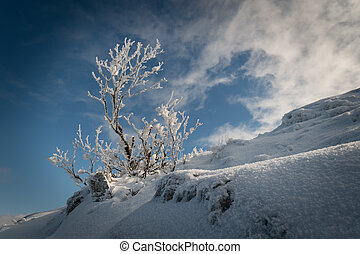 Snow-covered trees on the hillside against a blue sky