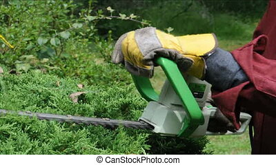 electric hedge trimmer in use - detail electric hedge...