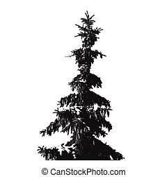 Black Fur-tree silhouette isolated on white background.