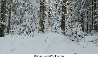 Walking into the winter forest