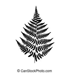 Background black-and-white fern - Black fern silhouette...