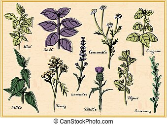Medical herbs set - Vector illustration of medical herbs set...