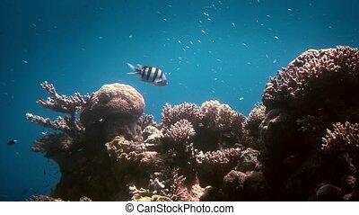 Underwater sea life in nature