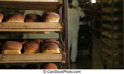 Working in a bakery. Trays with freshly baked bread at the...