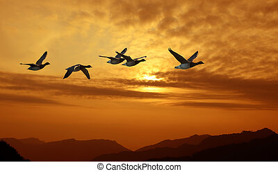 Birds flying against evening sunset in the background -...