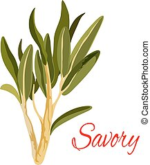 Savory herb spice vector sketch icon - Savory icon. Herbal...