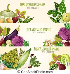 Vegetables and fresh veggies vector banners set - Vegetable...
