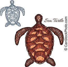 Sea turtle vector isolated icon - Turtle vector icon of...