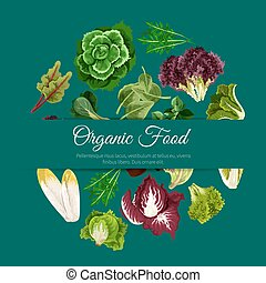 Leafy salads vegetables vector poster - Lettuce salads and...
