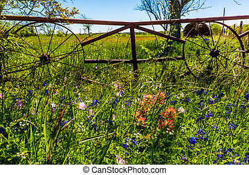A Meadow with Round Hay Bales and Fresh Texas Wildflowers -...