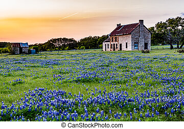 Abandonded Old House in Texas Wildflowers. - An Interesting...