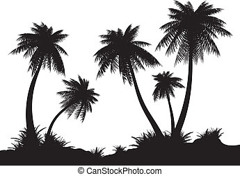 Coast. - Silhouettes of palms on a white background....