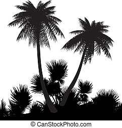Beach. - Silhouette of palms on a white background....