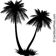 Silhouette of palms - Silhouette of palms on a white...