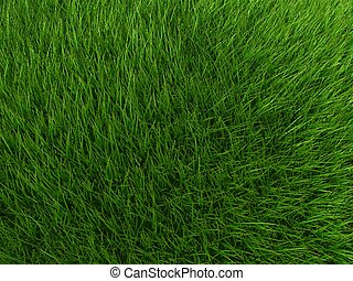 gras field - 3d rendered illustration of a green meadow