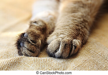 Stretched cat's paws close-up - Stretched cat's paws with...