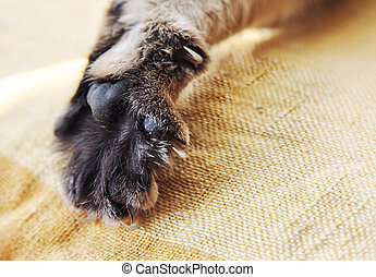 Stretched cat's paw close-up - Stretched cat's paw with...