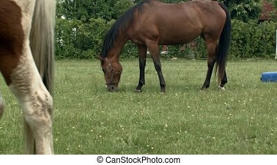 Horse grazing in Poland - Horse in nature in Poland