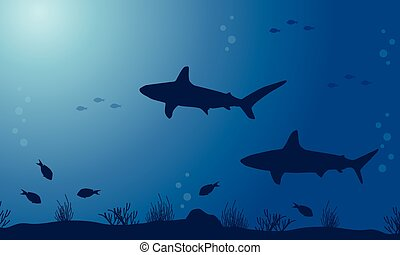 Silhouette of shark on sea backgrounds