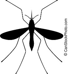 Mosquito, shade picture