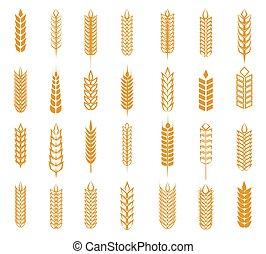 Wheat, rye and barley ear set isolated on white background....
