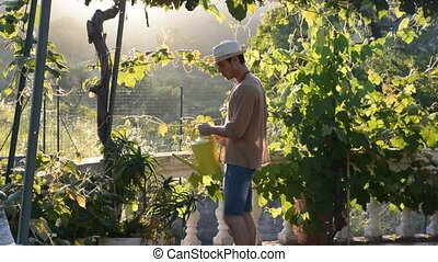 Young man watering plants in garden - Side view of young...