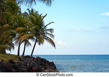 Luquillo Beach in Puerto Rico - Gorgeous coconut palm trees...
