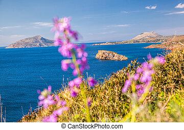 primavera, Grécia,  Sounion, durante, tempo, capa, flores