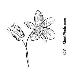 Wildflower vector icon - Wildflowers hand drawn outline...