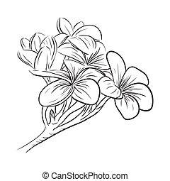Plumeria frangipani tropical flower icon