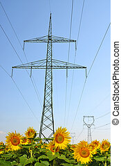 High voltage electricity pylons with sunflower field.