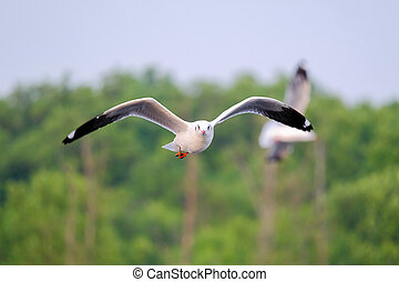 Tranquil scene with seagull flying in nature