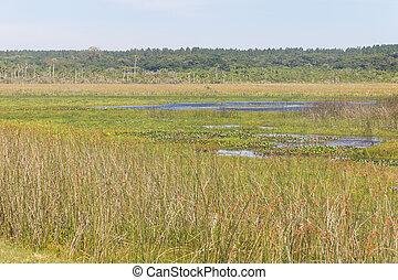Swamp in Lagoa do Peixe lake, Mostardas city, Rio Grande do...