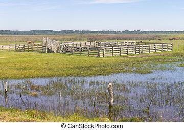 Farm in Lagoa do Peixe lake, Mostardas city, Rio Grande do...