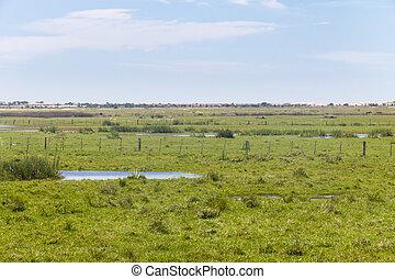 Swamp on a farm in Lagoa do Peixe National Park - Swamp in...
