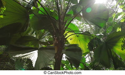 Natural background with green palm tree leaves in sunny day.