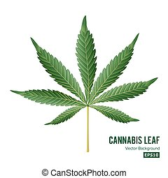 Cannabis Icon Vector. Medical Green Plant Illustration...
