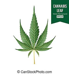 Cannabis Vector. Medical Green Plant Illustration Isolated...