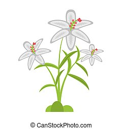 crocus flower petal leaf vector illustration eps 10