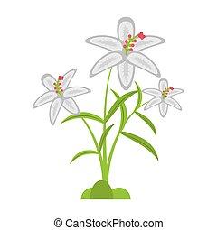 crocus flower petal leaf vector illustration eps 10