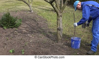 gardener man mix whitewash liquid in blue bucket near apple fruit tree.
