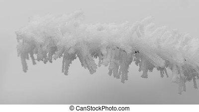 Ice frozen on branch bush - Ice and snow frozen on branch of...