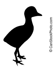 vector silhouette duckling on white background