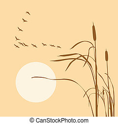 drawing flock geese on bulrush