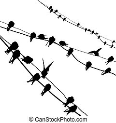 vector silhouette migrating swallow reposing on electric wire