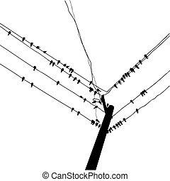 silhouette swallow reposing on electric wire