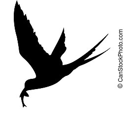 silhouette of the sea bird on white background