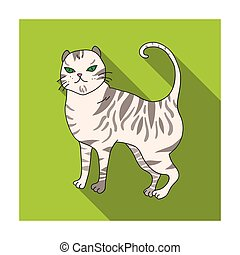 British Shorthair icon in flat style isolated on white...