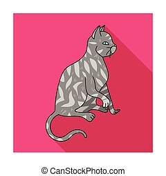 American Shorthair icon in flat style isolated on white...