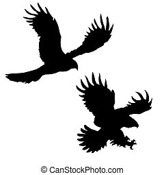 silhouette of the ravenous birds on white background